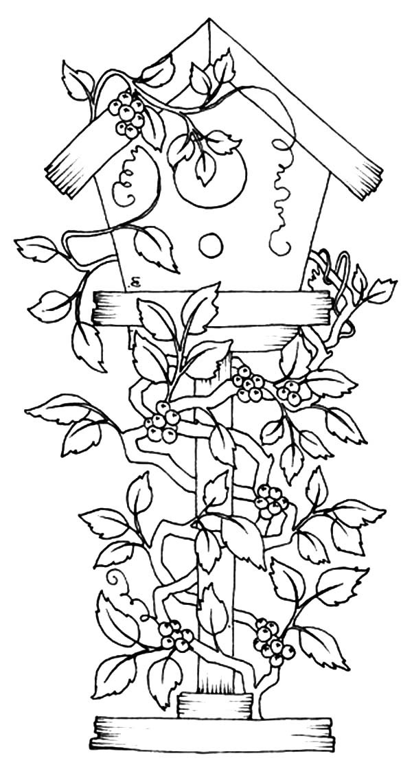 birdhouse coloring pages - photo#30