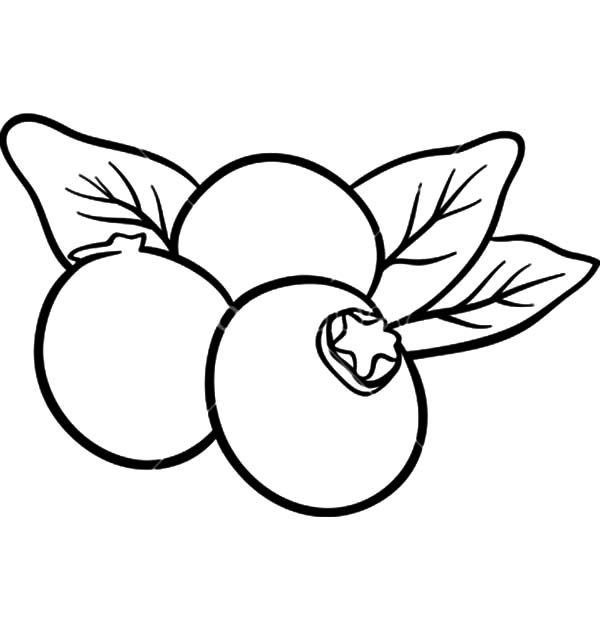 blueberry bush coloring page sketch coloring page