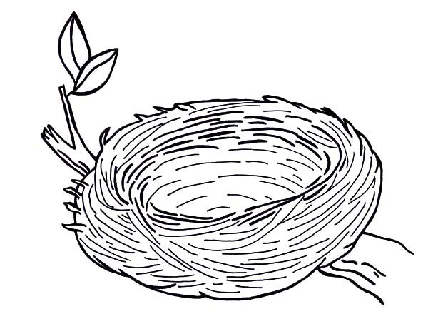 Warm And Safe Bird Nest Coloring Pages on Arbor Day Coloring Pages